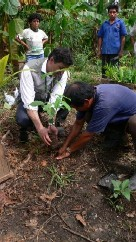 The first saplings to be planted